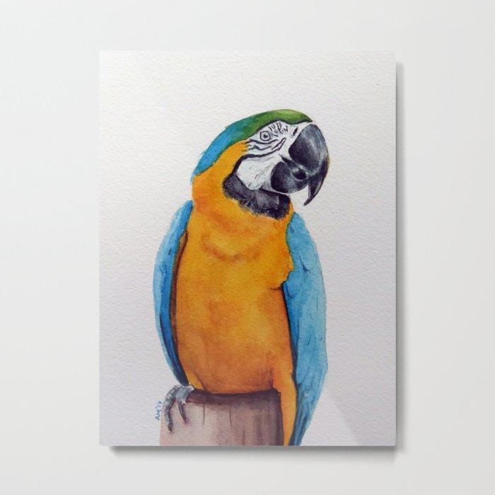 Macaw II Metal Print