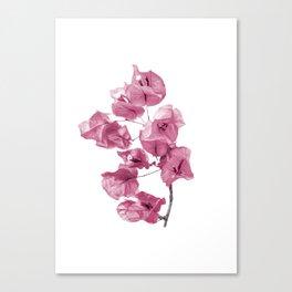 Santa Rita Flowers Photo Canvas Print