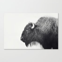 Buffalo Photograph in Black and White Canvas Print