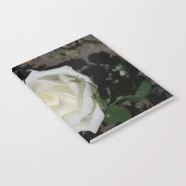 A white rose Notebook