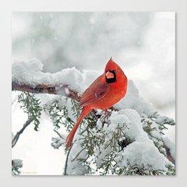 Cardinal on Snowy Branch (sq) Canvas Print