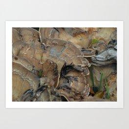 Wild Mushroom Art Print