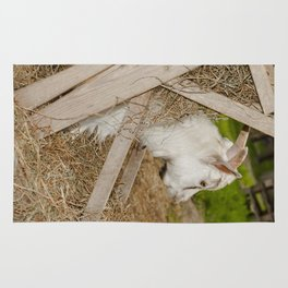 Little billy goat Rug