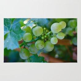 Sprig of Grapes Rug