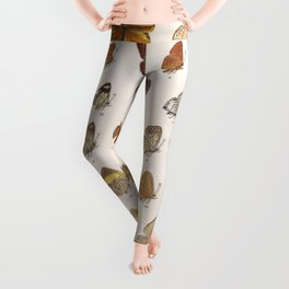 Vintage Scientific Insect Butterfly Moth Biological Hand Drawn Species Art Illustration Leggings