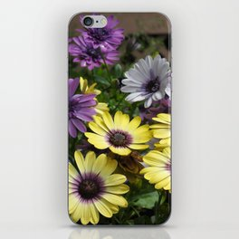 Yellow and Purple African Daisies iPhone Skin