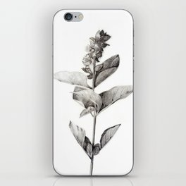 Herbs iPhone Skin