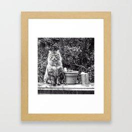peeping tom Framed Art Print