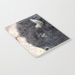 Bison Drive By Notebook