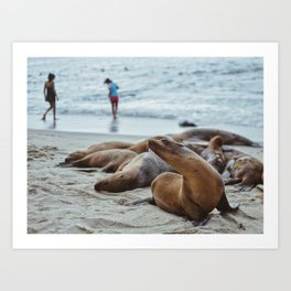La Jolla Seals Art Print