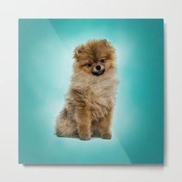 Cute Pomeranian Dog Metal Print