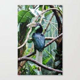 Female Hornbill Canvas Print