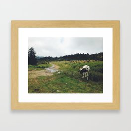 Grayson Highlands 001 Framed Art Print