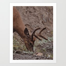 Deer Moments Art Print