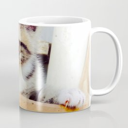 Potted kitten  Coffee Mug