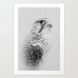 Hawk Portrait   Birds of Prey   Wildlife Photography Art Print