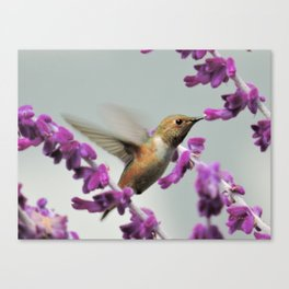 Slipping in for Another Sip Canvas Print
