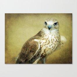 The Saker Falcon Stare Canvas Print