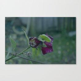 flower's dead Canvas Print