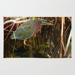 Beautiful Green Heron Rug