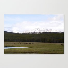 Plains, Bison, and Mountains in Yellowstone Canvas Print