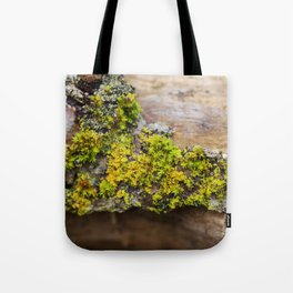 Moss on a Fallen Tree Tote Bag