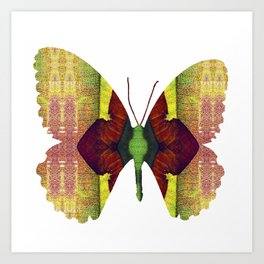 PhotoSynthesis/Butterfly1030023 Art Print