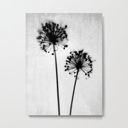 Dandelion Black and White Botanical Photo Metal Print
