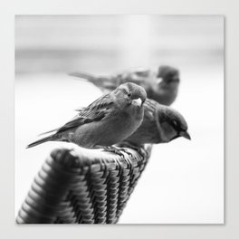 Sparrows On Chair Back Canvas Print