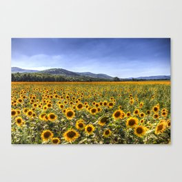 Sunflower Summer Field Canvas Print