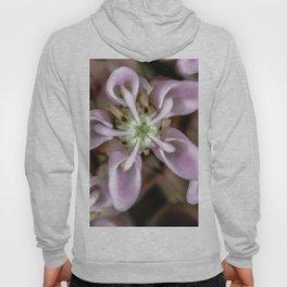 Milkweed flower close up Hoody