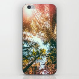 California Redwoods Sun-rays and Sky iPhone Skin