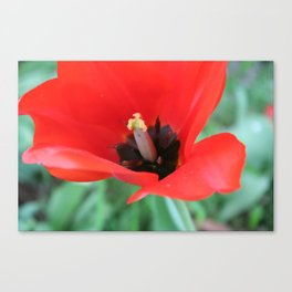 There's Nothing Like A Spring Stilletto  Canvas Print