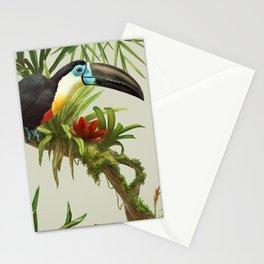 Channel- billed toucan vintage illustration. Stationery Cards