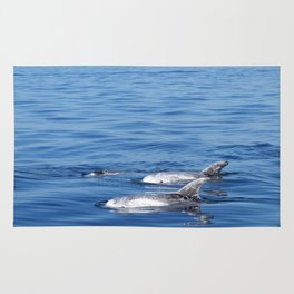Beautiful risso´s dolphins in Tenerife Rug