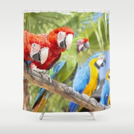 Curious macaws Shower Curtain
