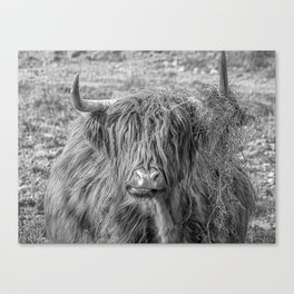 Black and white big Scottish Highland cow Canvas Print