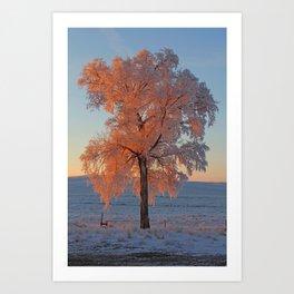 Frosty Sun Colors Art Print