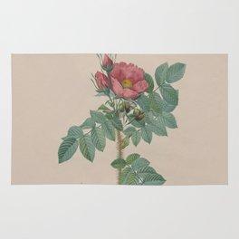 Rosa JP Redoute Rug