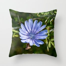 Chicory Flower Throw Pillow