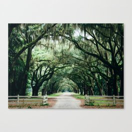 Southern Live Oak Canvas Print