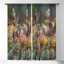 Prickly beauty Blackout Curtain