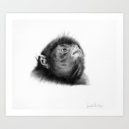 Colombian Spider Monkey Drawing Art Print