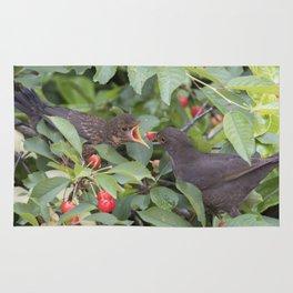 turdus merula common blackbird give food at her puppy Rug