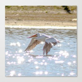 Skimming The Water Canvas Print