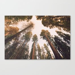 Sequoia Sunset Canvas Print