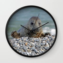 Gray seal - Kegelrobbe Wall Clock
