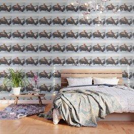 California Condor Wallpaper