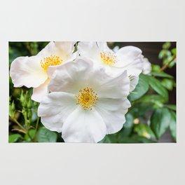 Camellia Bloom Flower Rug