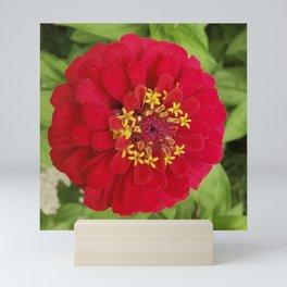 Red, RED Zinnia Mini Art Print